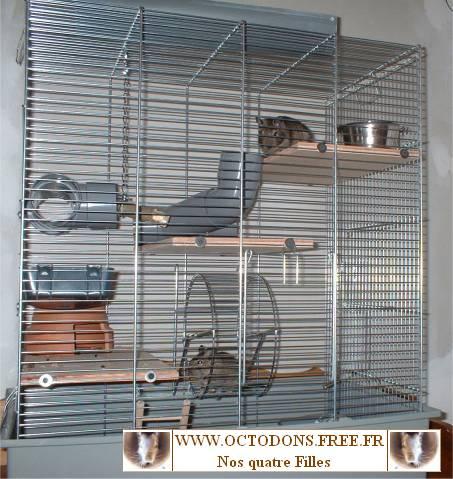 Pour écureuils elle est plus haute et plus grande que les cages pour